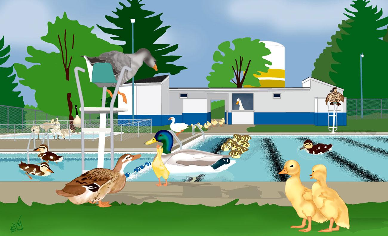 Like Ducks to Water ~ Gaunt Park Pool (117)