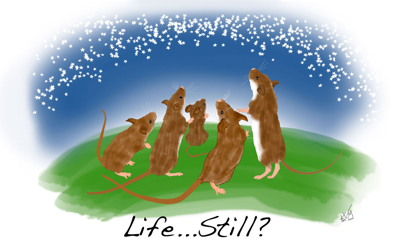 Life ... Still? (258)