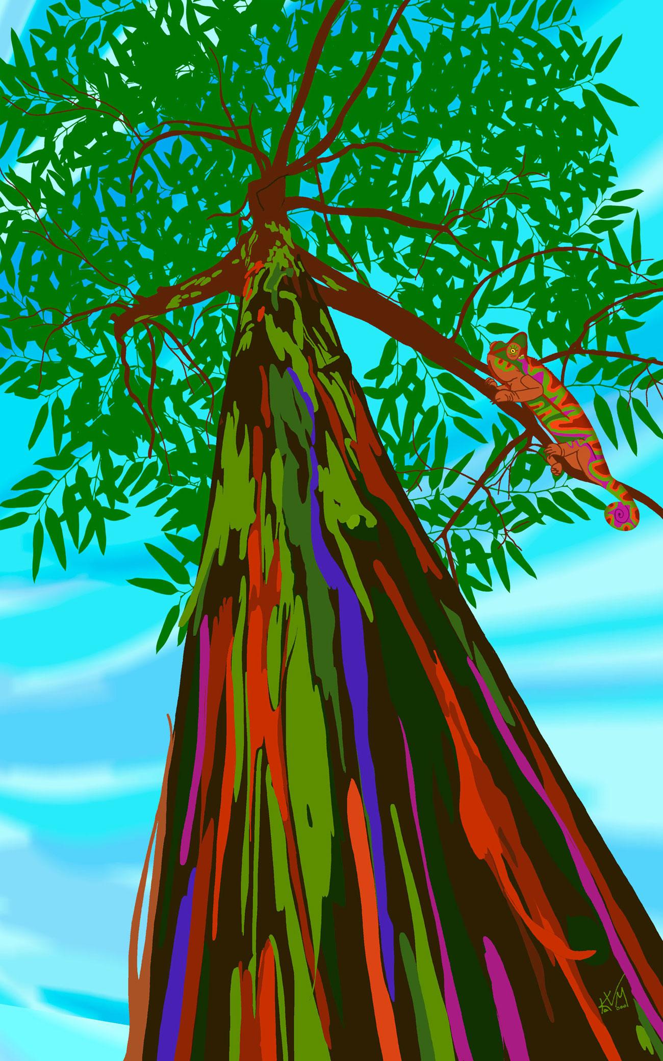 Somewhere Over the Rainbow Eucalyptus (298)