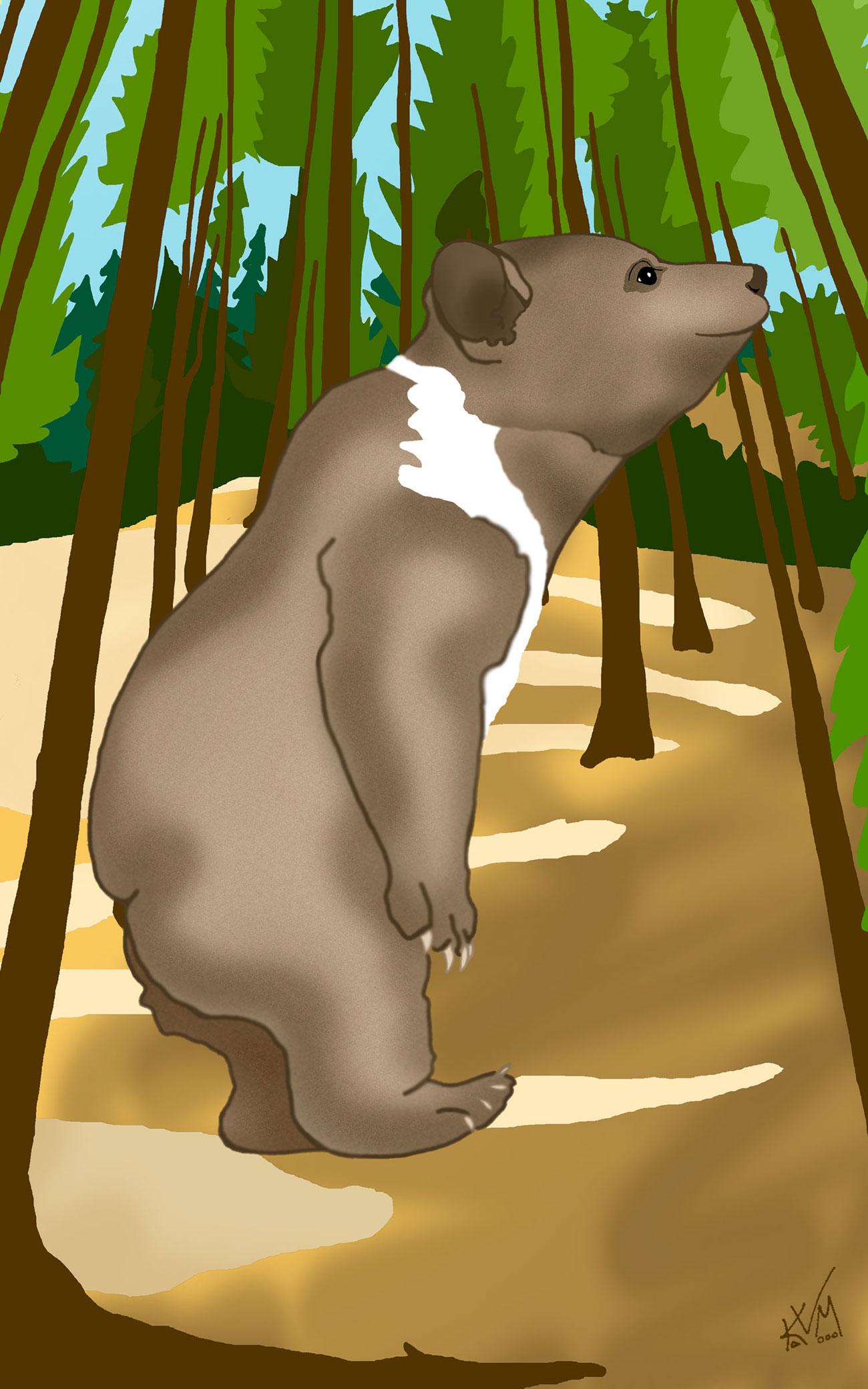 A Bear Walks into the Glen (314)